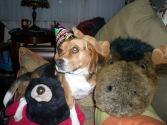lenny's dog